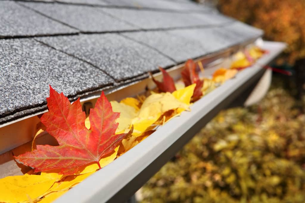 Seasonal Maintenance / Gutter Cleaning