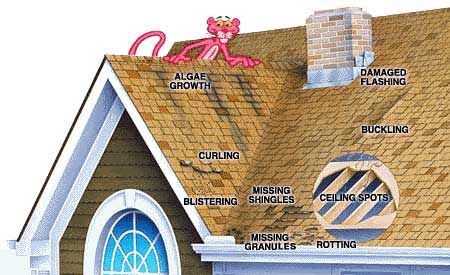 Looking for roof damage