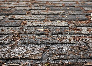 Missing, cracked, or curled shingles.