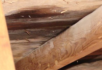 A leak in the attic.